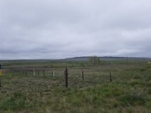 A gray morning over the fenceposts